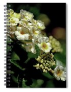Sprinkles On Lantana Flower Spiral Notebook