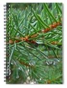Spruce Drops Spiral Notebook
