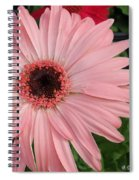 Square Framed Pink Daisy Spiral Notebook
