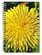 Square Yellow Dandelion Spiral Notebook