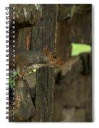 Squatting Squirrel Spiral Notebook