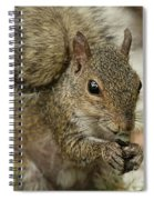 Squirrel And Nuts Spiral Notebook