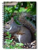 Squirrel IIi Spiral Notebook