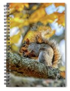 Squirrel In Autumn Spiral Notebook