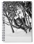 Squirrel In Low Branches Spiral Notebook