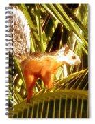 Squirrel In Palm Tree Spiral Notebook