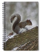 Squirrel In The Snow Spiral Notebook