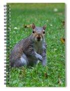 Squirrel Iv Spiral Notebook