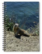 Squirrel Looking Back Over His Shoulder On The Coast Spiral Notebook