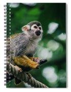 Squirrel Monkey Looking Up Spiral Notebook