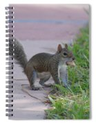 Squirrel Nuts Spiral Notebook