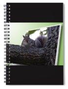 Squirrel On A Limb Spiral Notebook