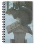 Squirrel On Bird Feeder Spiral Notebook