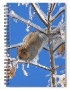 Squirrel On Icy Branches Spiral Notebook