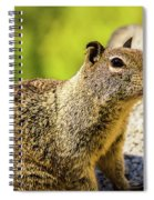 Squirrel On The Rock Spiral Notebook