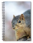 Squirrel Portrait Spiral Notebook