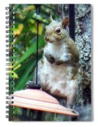 Squirrel Portrait Spiral Notebook