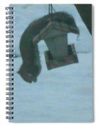 Squirrel Upside Down  Eating Spiral Notebook