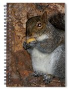 Squirrell Spiral Notebook