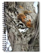 Squirrels At Play Spiral Notebook