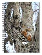 Squirrels At Play Vertically Spiral Notebook