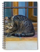 St Paul Cat Spiral Notebook