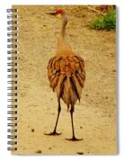Stage Left Spiral Notebook