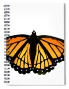 Stained Glass Wings Spiral Notebook