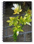 Stalk With Seed Pods Spiral Notebook