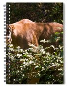 Stalking Big Cat Spiral Notebook