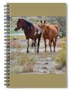 Stallion And Mare Spiral Notebook