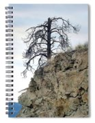 Stalwart Pine Tree Spiral Notebook