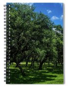 Stand Of Oaks Spiral Notebook