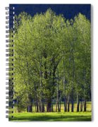 Stand Of Trees Yosemite Valley Spiral Notebook