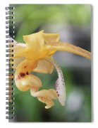 Stanhopea Orchid Spiral Notebook