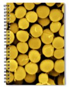 Staphylococcus Capitis Bacteria, Sem Spiral Notebook