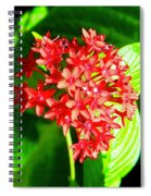 Star Cluster Spiral Notebook