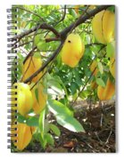 Star Fruit Belongs To The Plant Family Spiral Notebook
