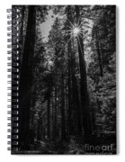 Star In The Forrest Spiral Notebook