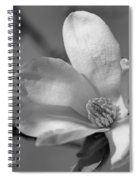 Star Magnolia In Black And White Spiral Notebook