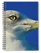 Intense Stare Spiral Notebook