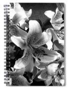 Stargazer Lilies Bw Spiral Notebook