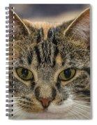 Staring Contest Spiral Notebook