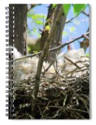 Staring From Its Nest Spiral Notebook