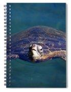 Staring Turtle Spiral Notebook