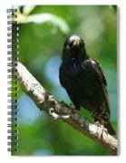 Starlet Spiral Notebook