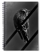 Darling Starling 2 Bnw Spiral Notebook