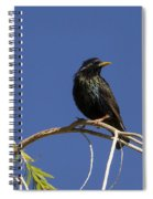 Starling Spiral Notebook