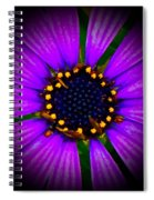 Stars In The Daisy Spiral Notebook