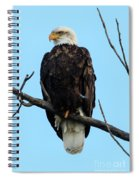 Stately Eagle Spiral Notebook
